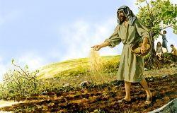 Kết quả hình ảnh cho người gieo giống