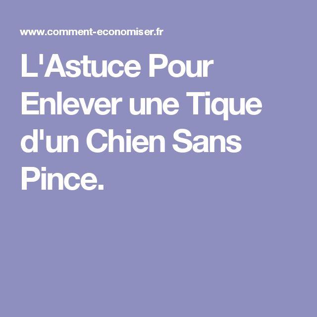 L'Astuce Pour Enlever une Tique d'un Chien Sans Pince.