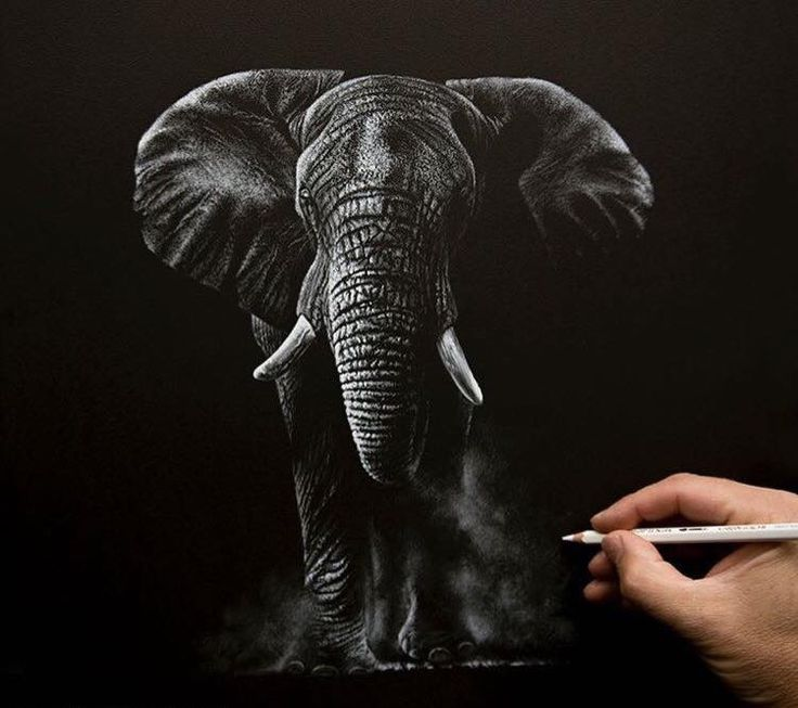 Best Richard Symonds Images On Pinterest Draw Wildlife Art - Stunning drawings of endangered wild animals by richard symonds