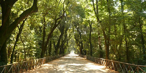 BOSCO DI CAPODIMONTE. Il più grande spazio verde di Napoli è rappresentato da questo magnifico bosco. Rispetto al precedente è molto più ricco di alberi e prati, inoltre è un posto ideale dove fare pic nic.  Dove si trova: Via Miano, 4, Napoli
