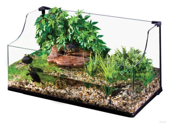 Cosa serve per allestire un tartarugaio acquatico? La guida per conoscere tutti gli accessori indispensabili alla vita della tartaruga acquatica.