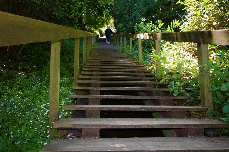 Historic Steps are landmarks of history to Marin Towns - not to mention great exercise for Marin residents of today!  Some are short, some longer - all fun!