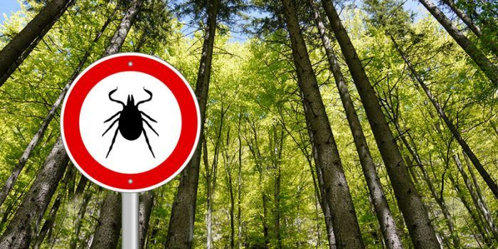 Find out the truth about Lyme disease and its many effects on the brain. A proper clinical diagnosis is critical but infected people can get better.
