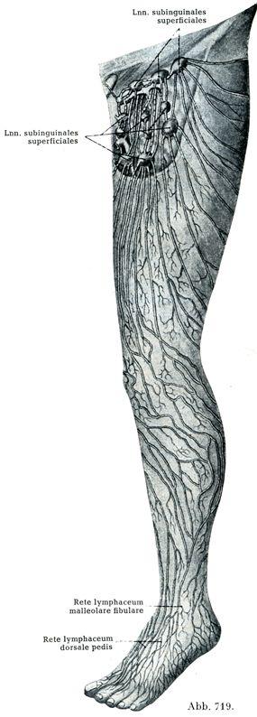 Rauber-Kopsch解剖学