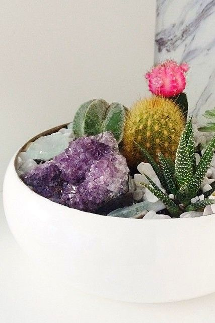 zen bowls with succulents, cacti + crystals