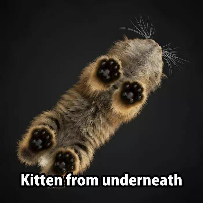 kitten from underneath glass table - paws so cute memes Cat memes - kitty cat humor funny joke gato chat captions feline laugh
