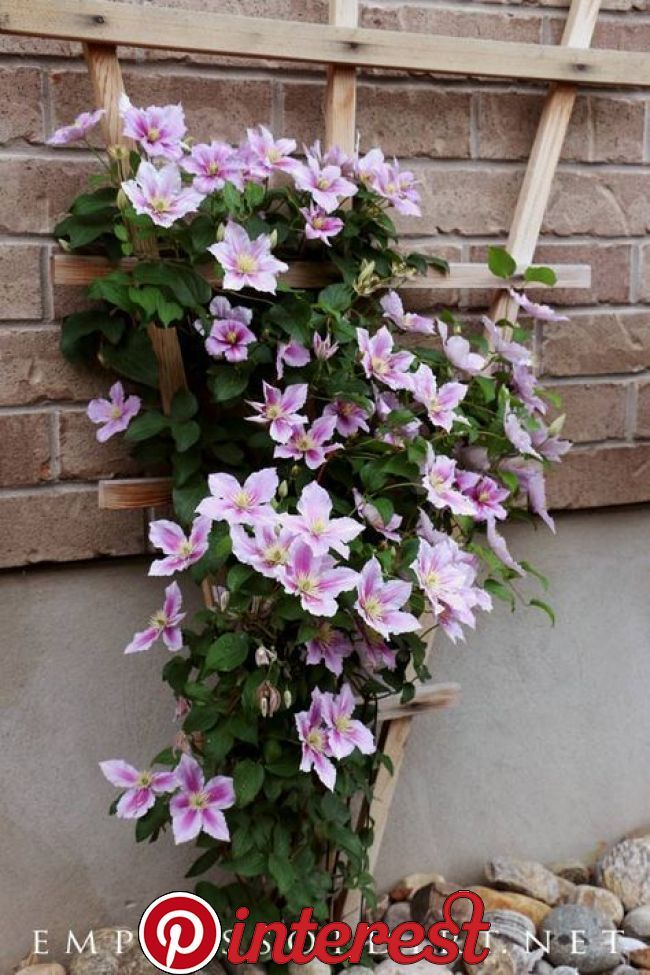 29 Beautiful Moon Garden That Will Transform Your Yard Garten Clematis Trellis Flowering Vines Flower Trellis