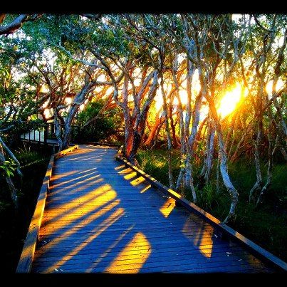 Sunrise Walk amongst the trees Mooloolaba Beach - Sunshine Coast, Australia