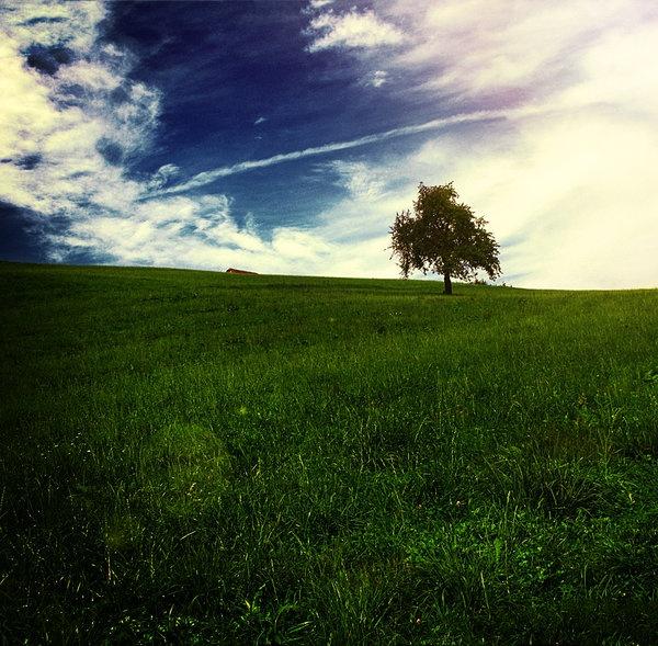The field by ~BlackCynnamon
