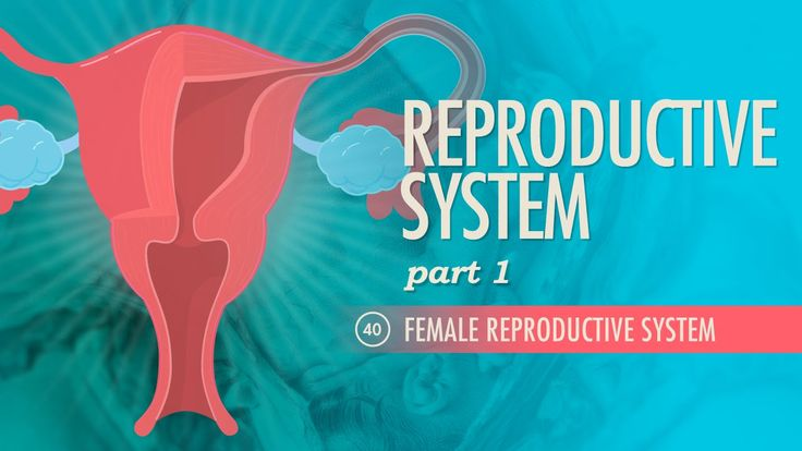 Reproductive System, part 1 - Female Reproductive System: A&P #40