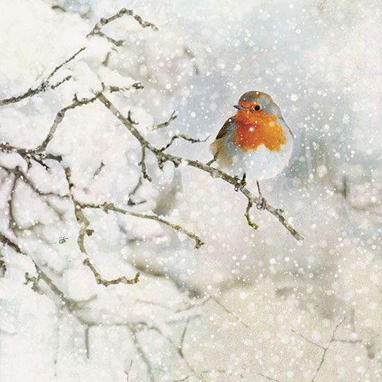 Robin Red Breast - Bug Art greeting card