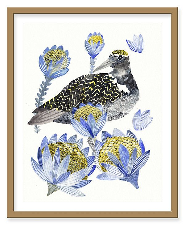Michelle Morin, Plover and Protea | Paintings, Photographs