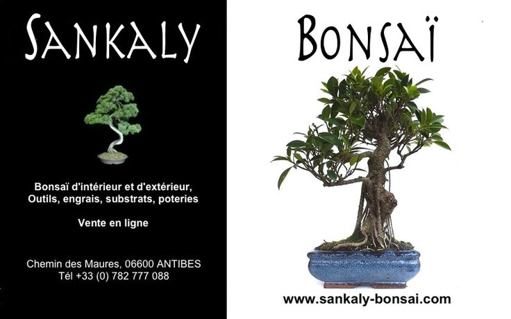 1000 ideas about bonsai interieur on pinterest bonsai for Arbre bonsai exterieur