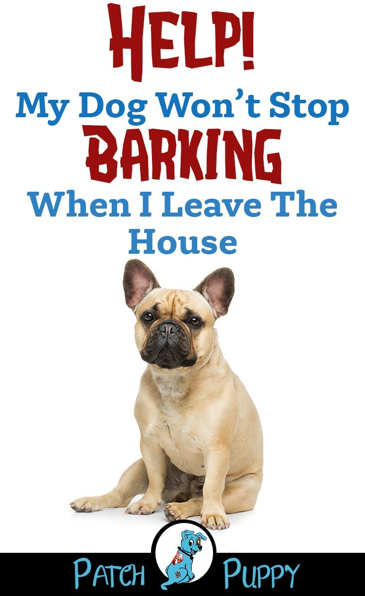 How To Keep My Dog From Barking When I Leave Video Case Study