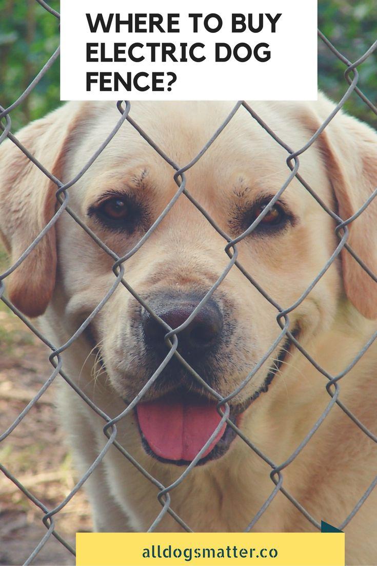 Dog Fence For Big Dogs Portable Peiranos Fences Garmin 430 Wiring Diagram Network Cable
