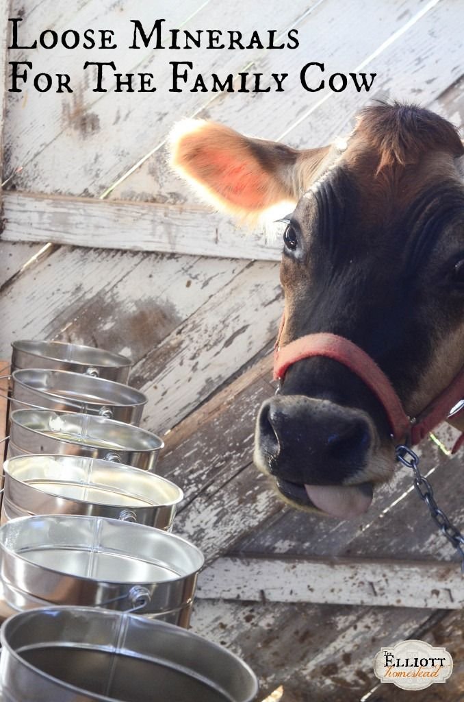Loose Minerals for Dairy Cows | The Elliott Homestead (.com)