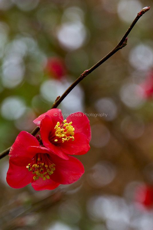 Flowers at St Joseph's Convent   © Elyse Childs Photography