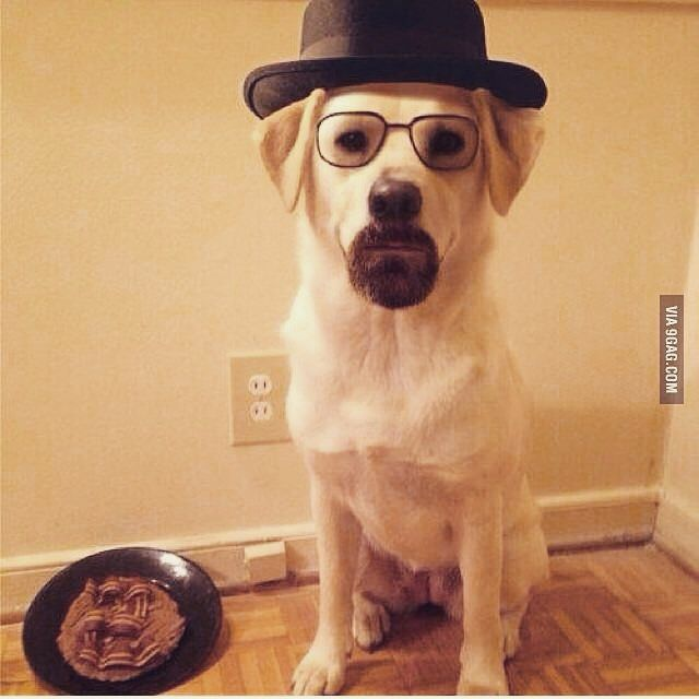 Breaking bad lab  #Halloween #halloween2015