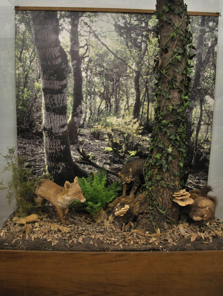 Ricostruzione ambientale delle foreste della Sardegna.  Museo zoologico Università di Cagliari