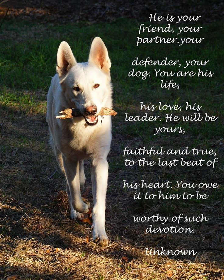 A Dog Poem   I hope you feel this way about your dog. I feel this way about mine.