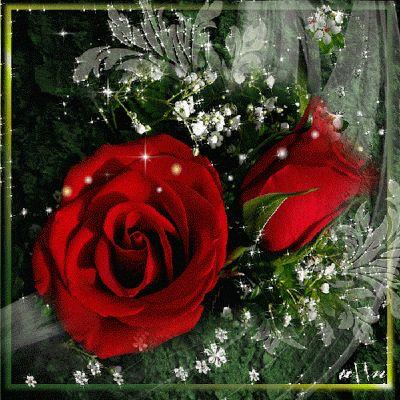 Imagenes Gifs: Brillante rosas rojas