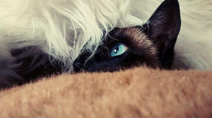 On se cache comme on peut... et pourquoi pas confortablement?
