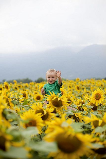 Like a postcard - Märtha in a french field of sunflowers!