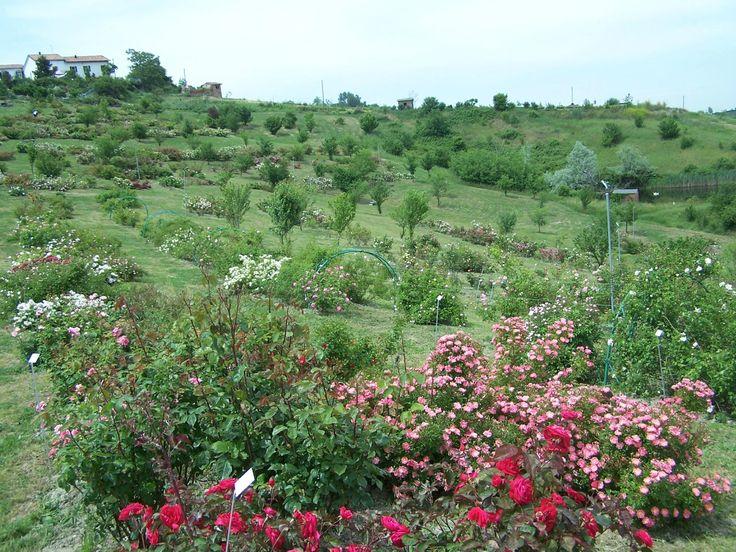 Museo Giardino della Rosa Antica (rose garden) - Serramazzoni, Italy