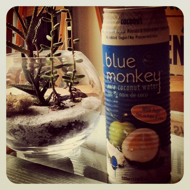 who doesn't want a blue monkey?!? @ Academy of Lions General Store & Espresso bar <3