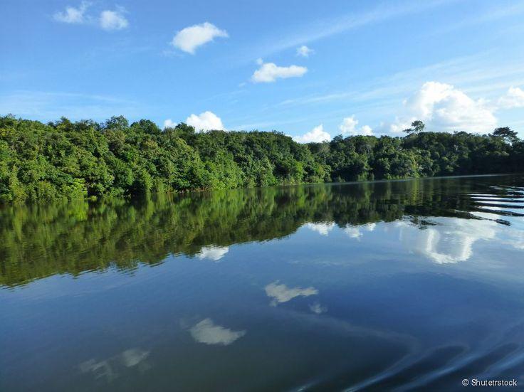 Floresta Amazônica, Amazonas A maior e mais diversificada floresta tropical do mundo tem mais...