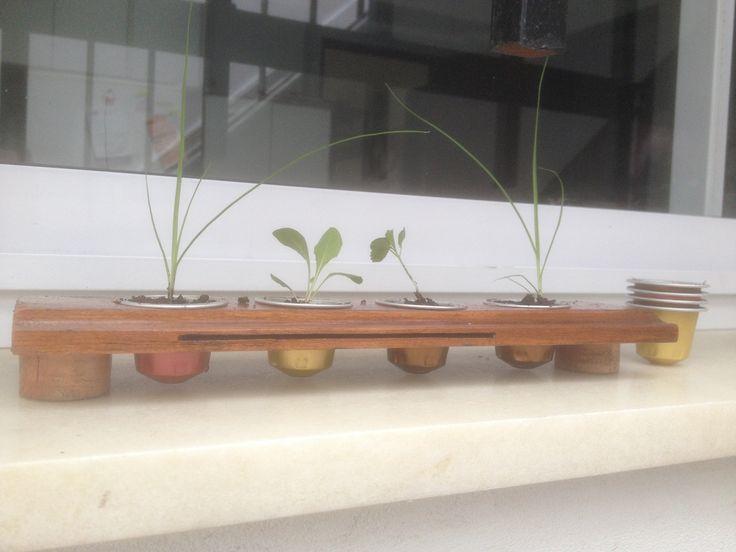 Micro macetas hechas con c psulas nespresso y madera - Macetas de madera ...