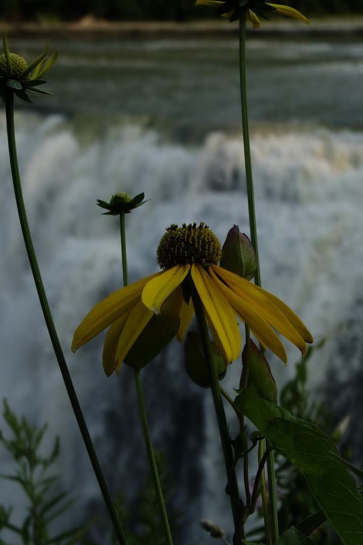 Flower and falls