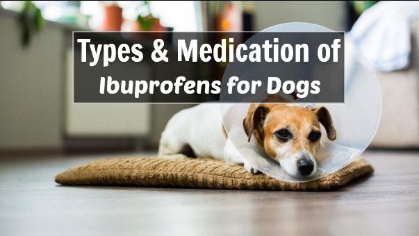 http://www.careyourpuppy.com/ibuprofen-for-dogs/
