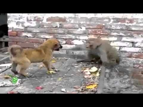 Videos For Fun: Whatsapp Latest Funny Video || Monkey Play With Pu...