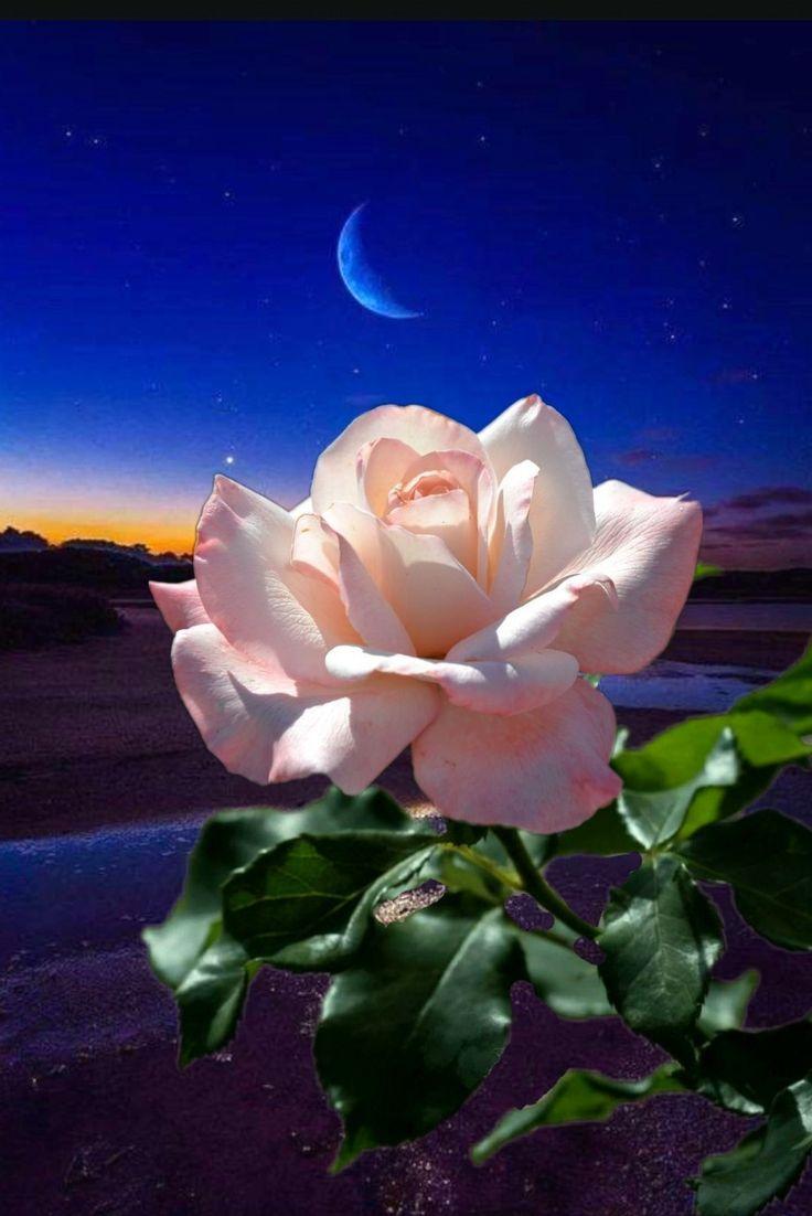 Картинки доброй ночи и цветы