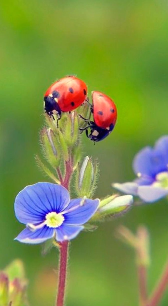 lady bugs bees flowers - photo #46