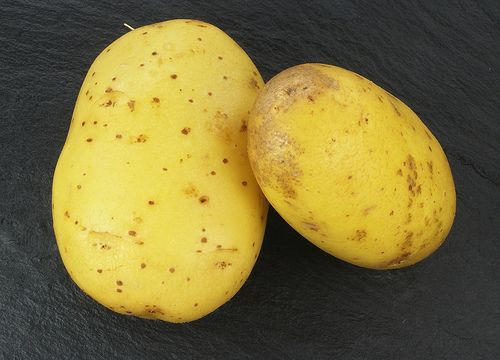 Quelles sont les propriétés du jus de pommes de terre crues