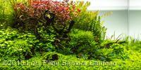 2015 AGA Aquascaping Contest - Aquatic Garden, 60L ~ 120L