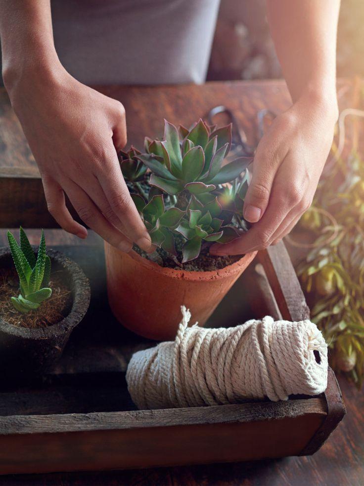 Was haben denn Pflanzen mit einem gesunden Schlaf zu tun? Eine ganze Menge! Diese Zimmerpflanzen machen uns gesund und sind ein Muss im