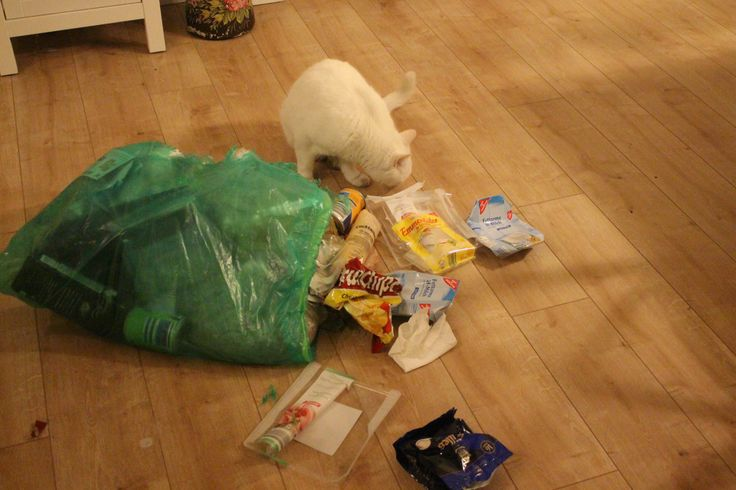 Trash-Party