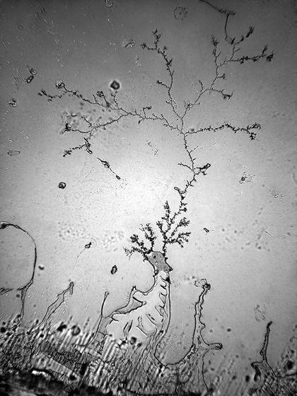 """Lágrimas humanas bajo el microscopio. La fotógrafa de Los Ángeles Rose-Lynn Fisher realizo """"La Topografía de las Lágrimas"""" que es un estudio microscópico de las lágrimas emitidos durante una serie de estados emocionales y reacciones físicas...."""