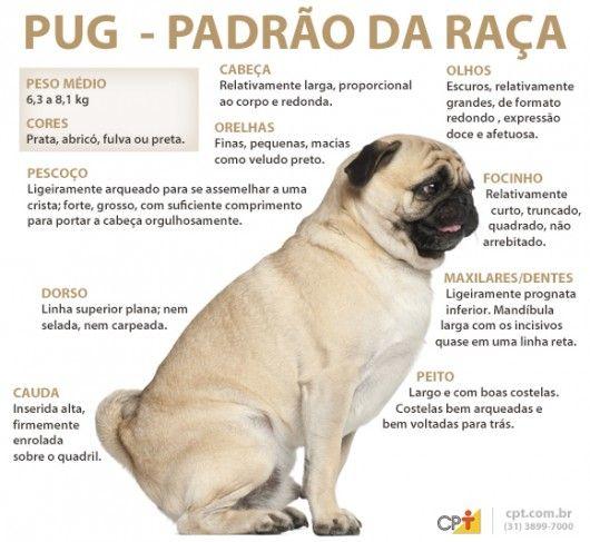 Padrão da raça Pug