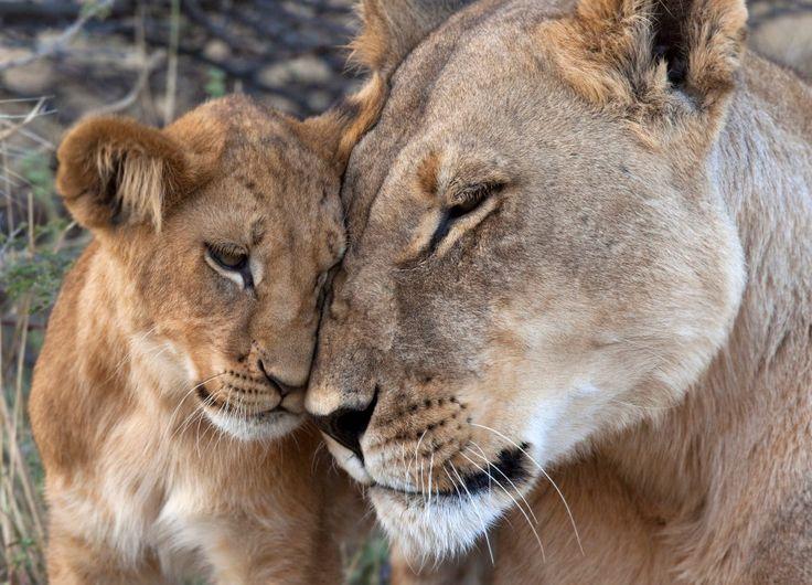 20 Imgenes de animales demostrando su amor  Fress