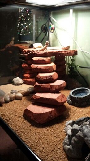DIY cornering foam bearded dragon basking spot. Micheal and I made it in about 2 hours!! Only costs $5!! Bearded dragon terrerium. DIY