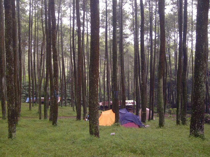 Camping Ground-Hutan Pinus Batu Kuda, Bandung Timur, Jawa-Barat, Indonesia