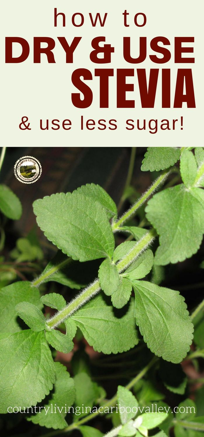 Stevia can be used as a sugar substitute. Grow it as a plant and dry the leaves. Here's how to dry Stevia.