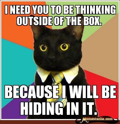 business cat meme generator cswmc