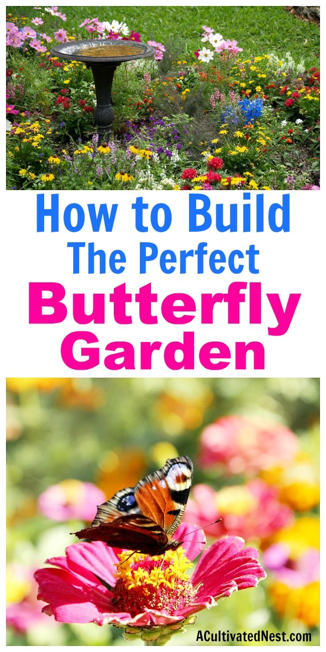 How To Build A Erfly Garden Gardening Tips Inspiration Pinterest Plants And Vegetable