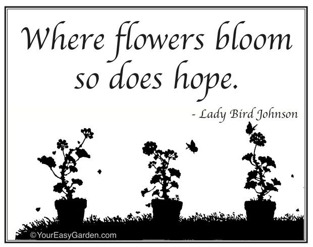 Lady Bird Johnson certainly knew what she was talking about!