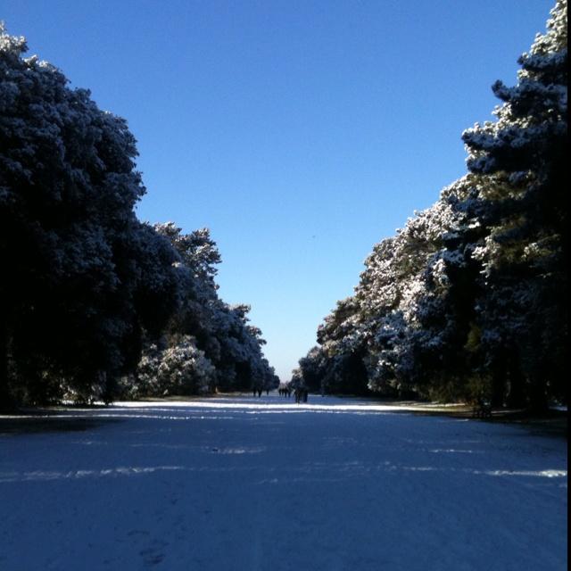 St Anne's park, Raheny -  December 2010